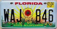 florida 2004 state wildflower